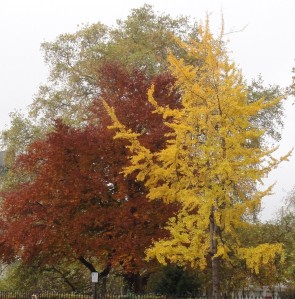Autumn colour in Brunswick Square 2012