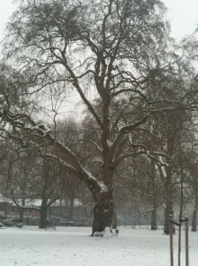 Brunswick plane tree with snowman 20 Jan 2013 by Susannah